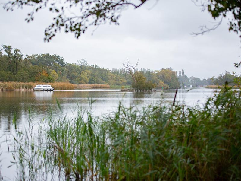 Fairhaven Woodland and Water Garden, Norfolk.