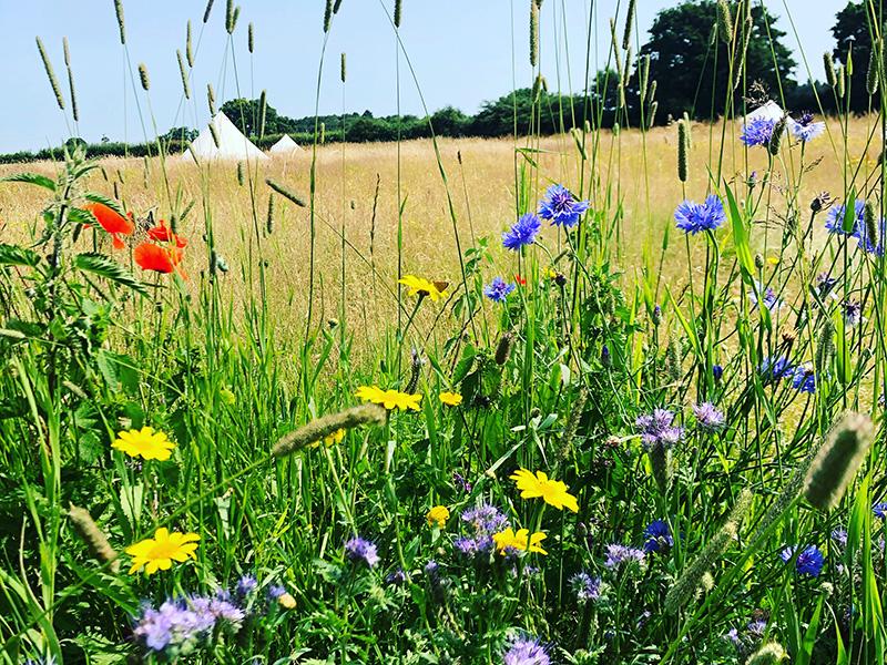 Wildflower Glamping Norfolk.